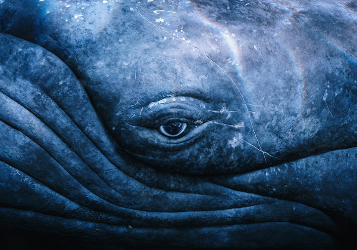 close up of whale face