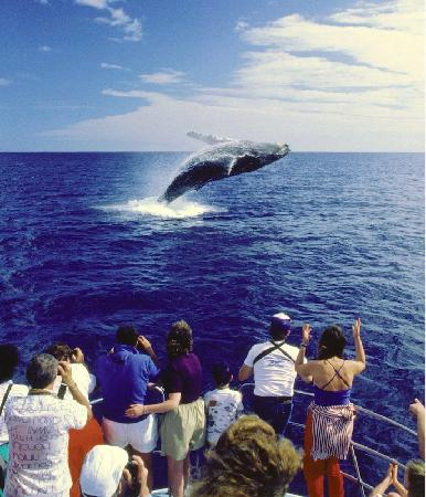 whale jumping out of water in front of tour boat